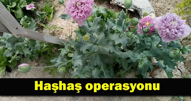 Karaman'da haşhaş operasyonu