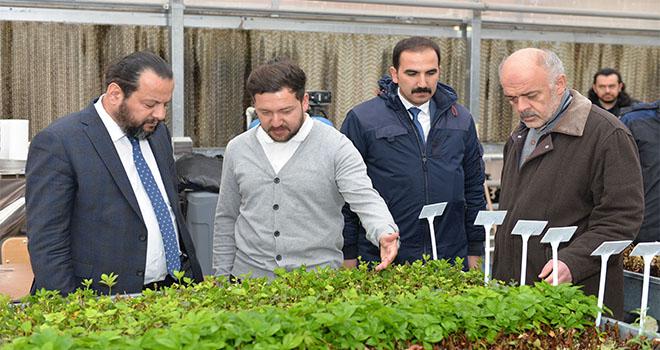 KMÜ, çevre düzenlemesi için kendi bitkisini üretiyor