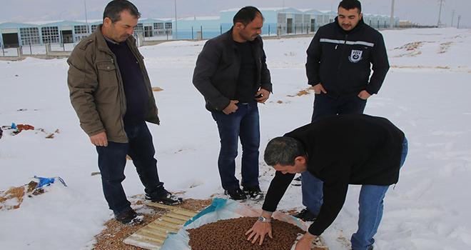 Karaman'da belediye sokak köpeklerine yiyecek bıraktı
