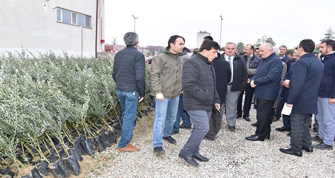 Karaman'da çiftçilere 72 bin adet fidan dağıtıldı